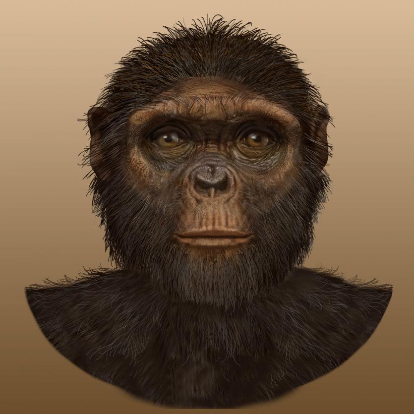 先史時代 人類の進化の過程